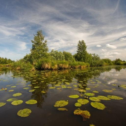 Natuurlezingen in Fryslân