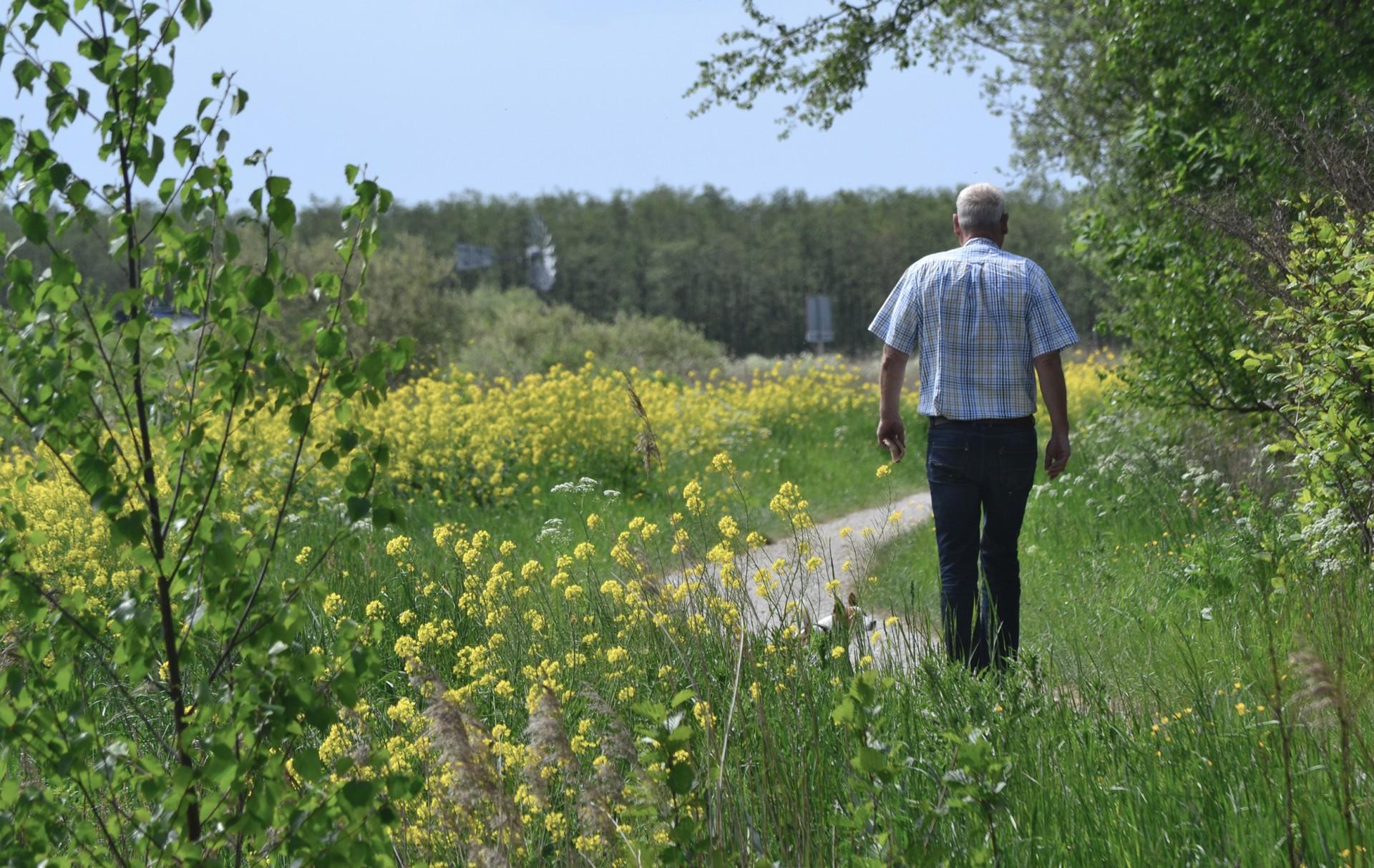 Wandelen in de Friese natuur van It Fryske Gea