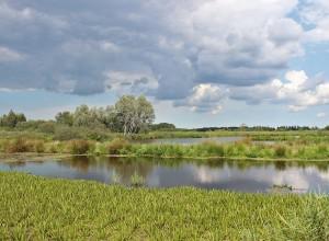 Deelgebied Wikelslân in de Alde Feanen