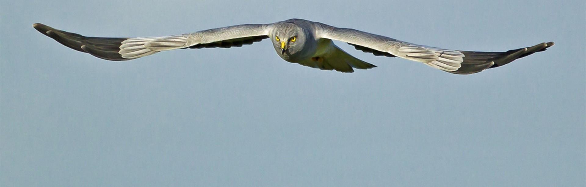Nieuws over de Friese natuurbescherming