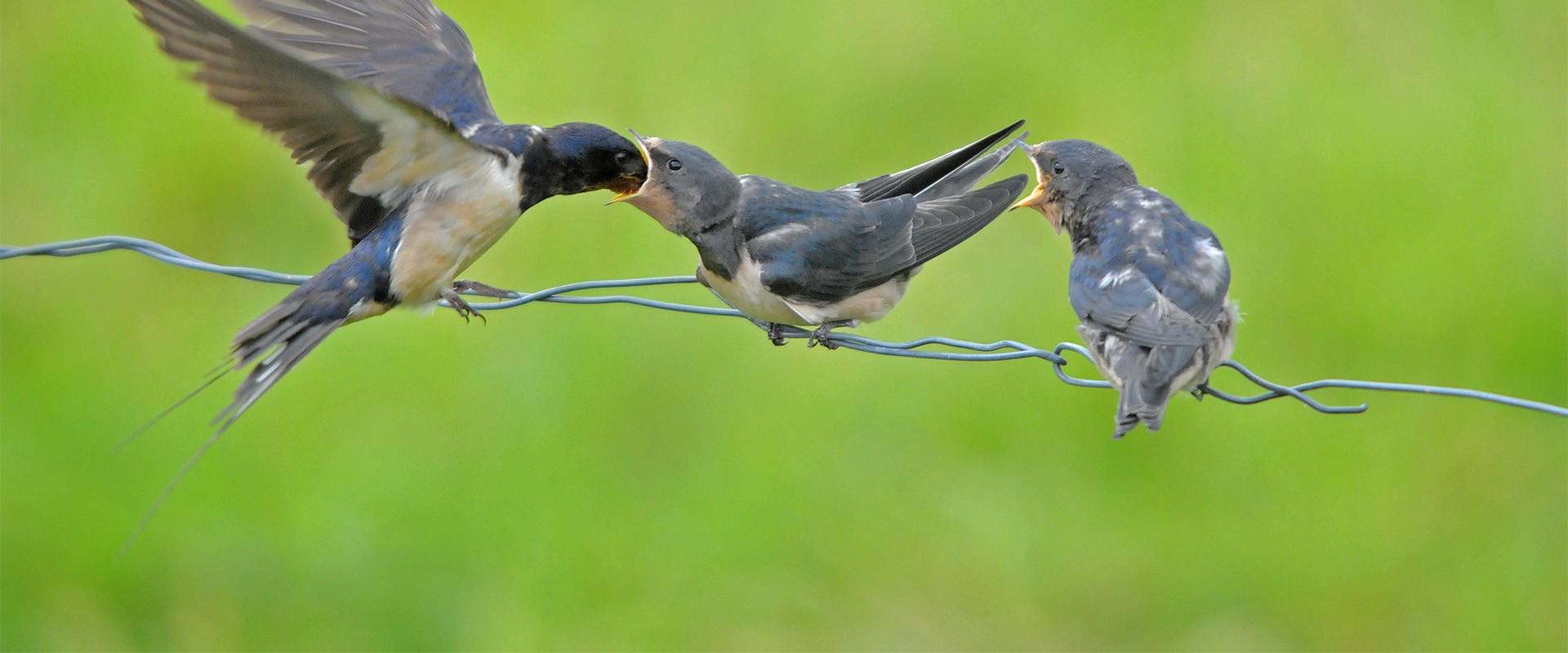 Lid worden van It Fryske Gea voor bescherming van Friese natuur