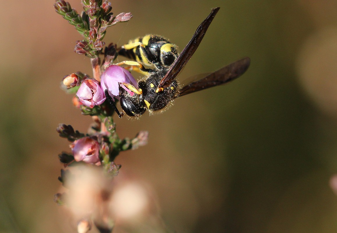 Bescherming van biodiversiteit in It Fryske Gea