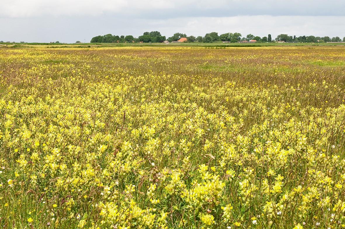 De Warkumerwaard   Kerngebied voor weidevogels   It Fryske Gea