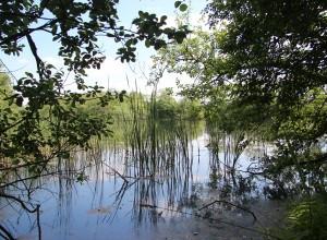 Ottema Wiersma Reservaat