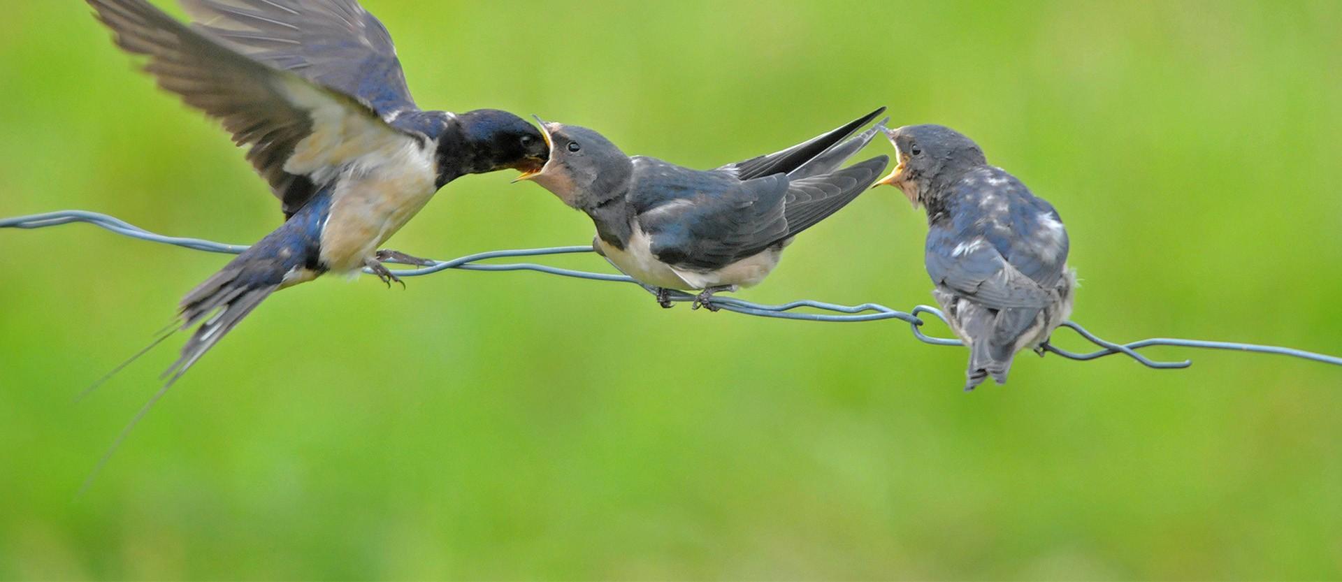 Natuurbeschermingsorganisatie It Fryske Gea
