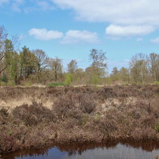 Natuurbescherming It Fryske Gea