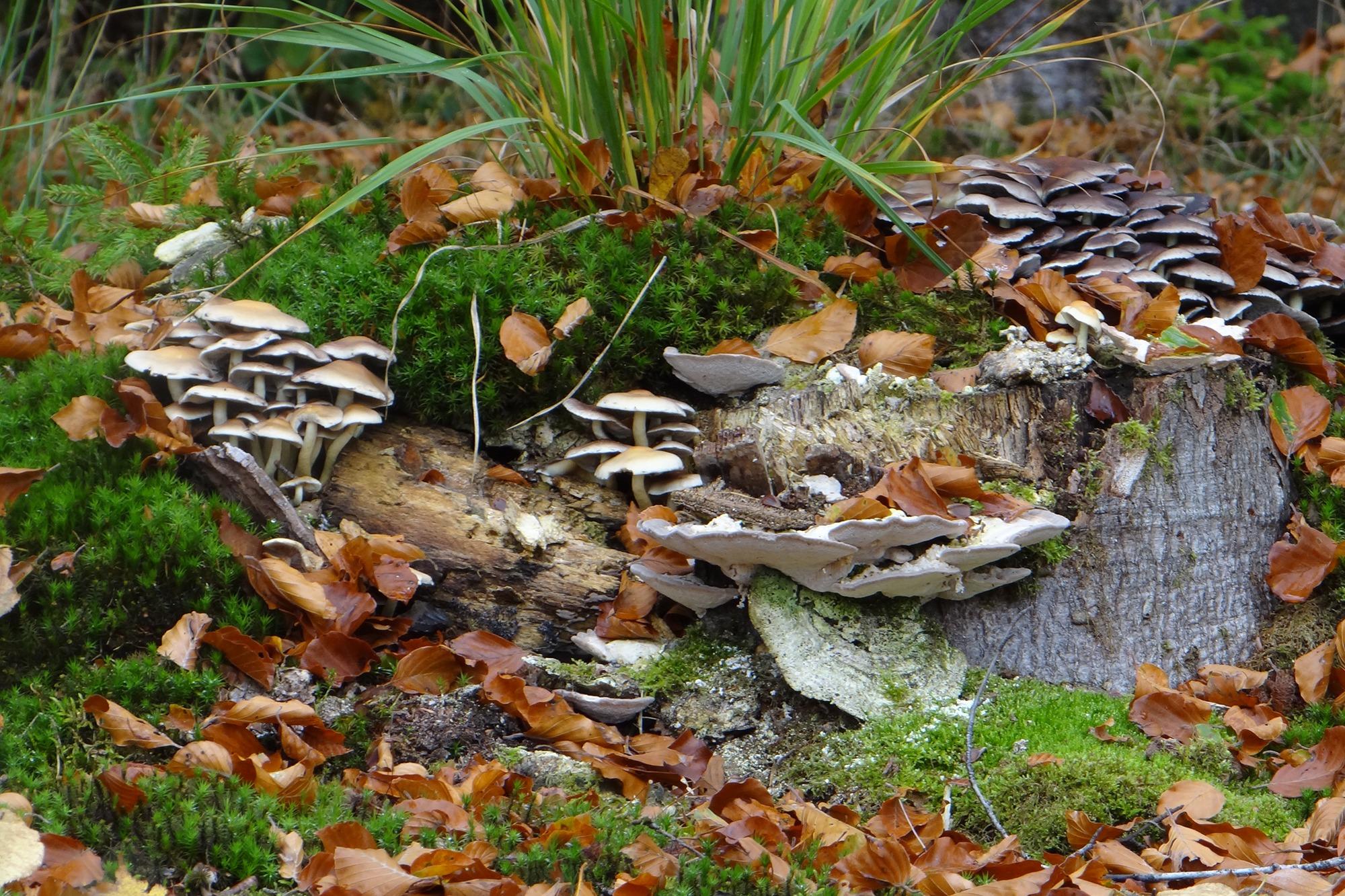 paddenstoelen op dood hout