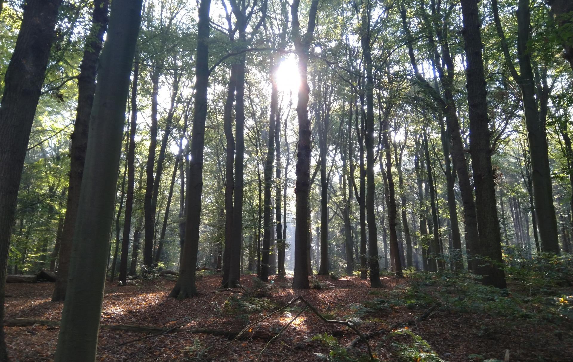 bosrijk in It Fryske Gea