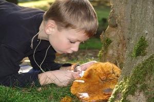 Excursie paddenstoelen voor kinderen