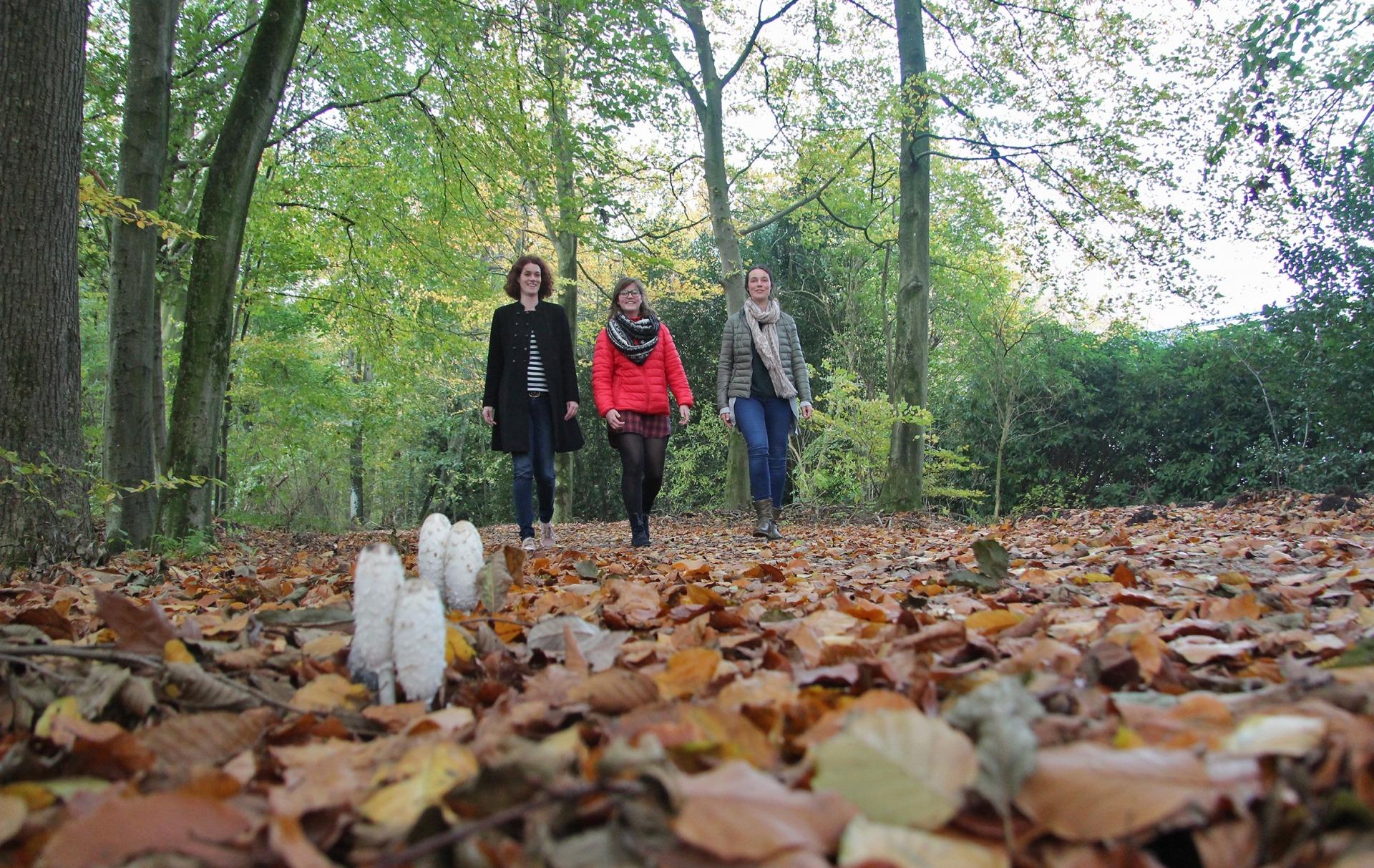 Wandelen in de herfst Fryslân