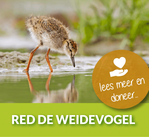 Red De Weidevogel