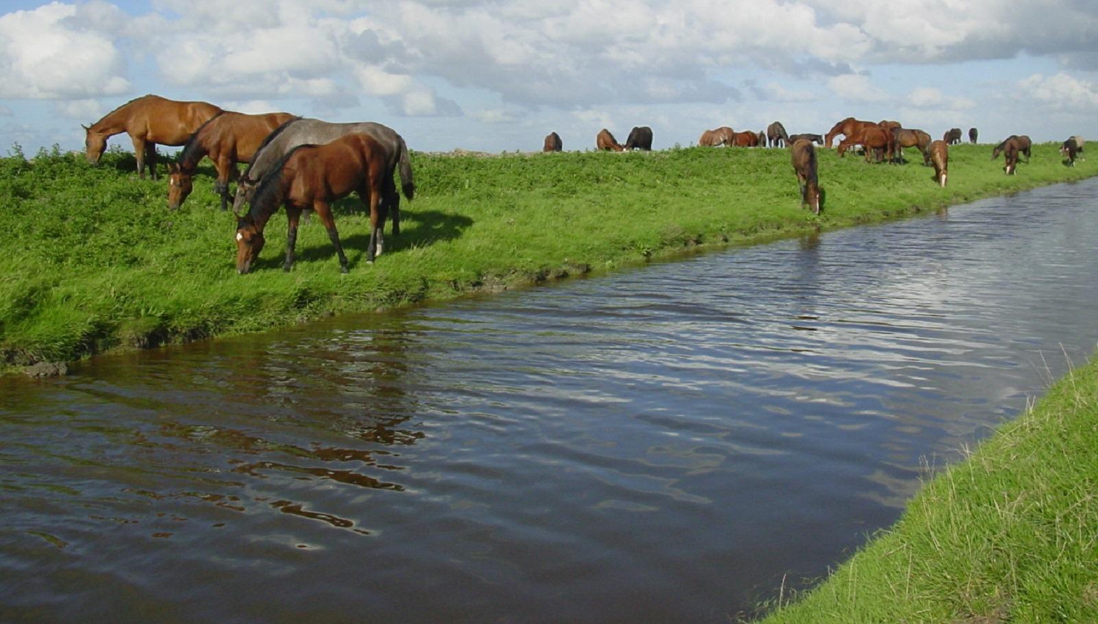 Wandelroute Dobbepaarden Noard-Fryslân Bûtendyks