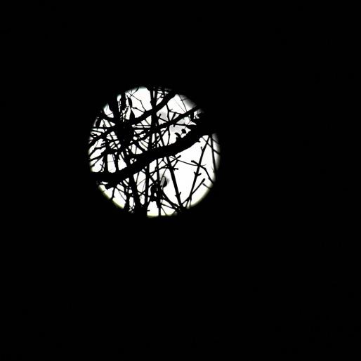 Volle Maan Door Bomen
