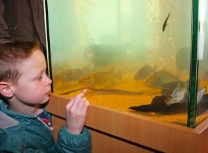 jongen bij aquarium