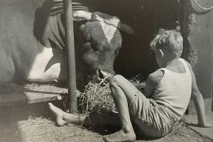 Hans is 'bevriend' met de stier.