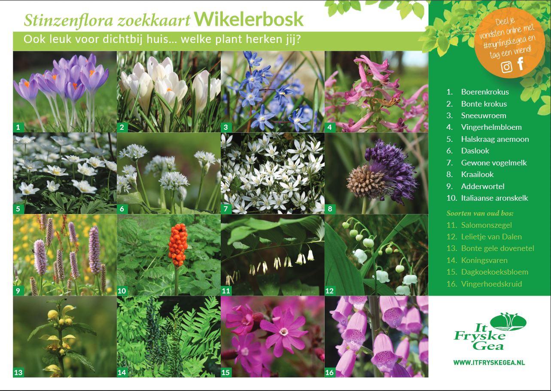 Zoekkaart Wikelerbosk