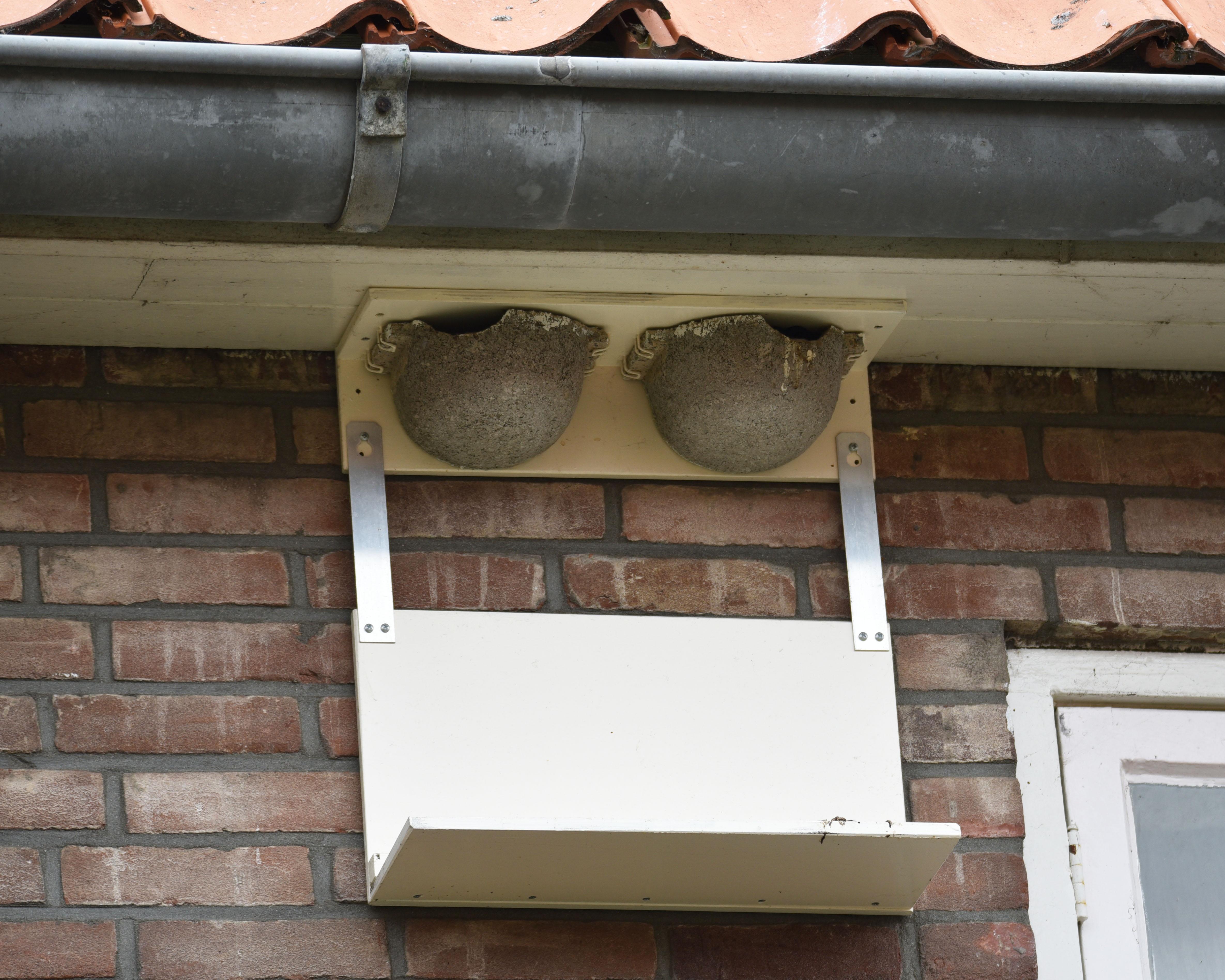Huiszwaluwen nest met plakje eronder