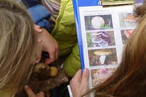 Op zoek naar verschillende soorten paddenstoelen.