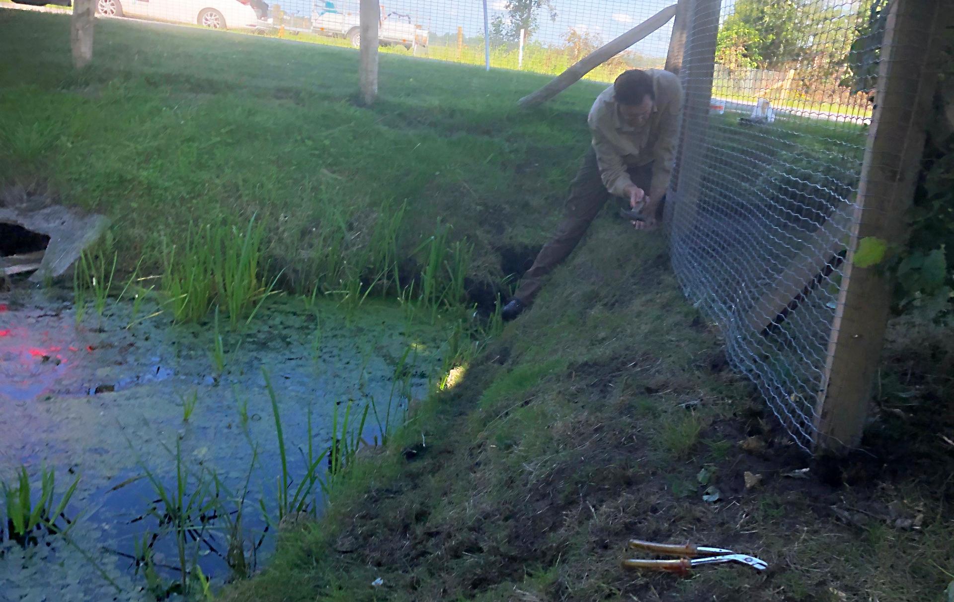 Otter bescherming