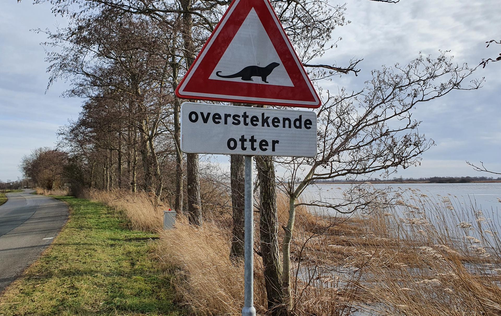 Gevaarlijke weg voor de otter