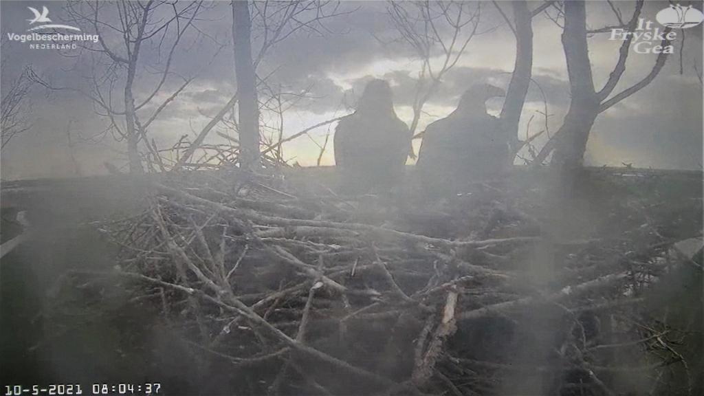 zeearend webcam