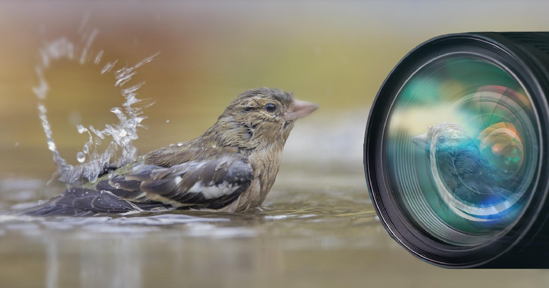 Kiek'es fotowedstrijd